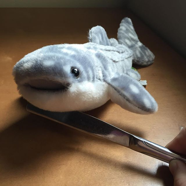 @sketchshark I am holding your shark plush hostage. Demands to follow